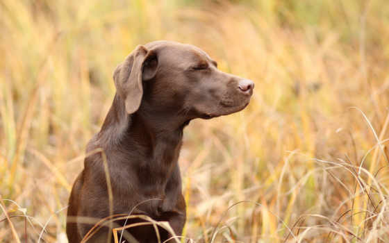 animals, dogs, собака, baby, страница, animal, cute, щенок,