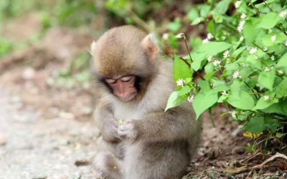 природа, обезьяна, животные Фон № 36441 разрешение 1920x1080