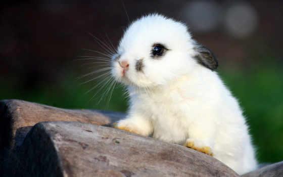 красивые, кролик, кролики