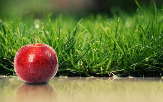 apple, яблоки, трава