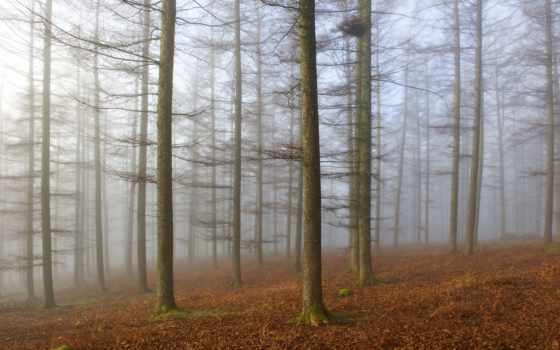 parte, naturaleza, туман