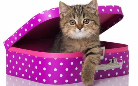 день, картинка, чемодан, gif, дружбы, кошки, гифы, открытки, статусы, more, zhivotnye,