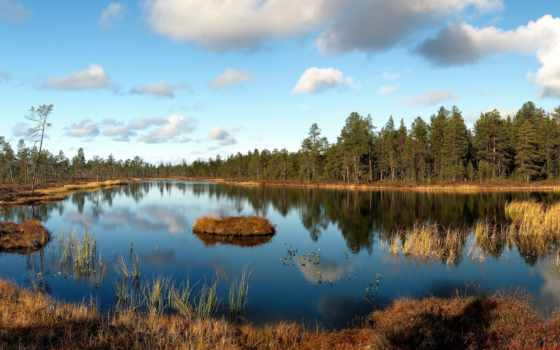 landscape, wood, озеро, осень, трава, остров, shadows, faded,