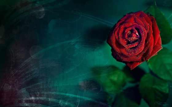 para, amor, fondo, gratis, poemas, pantalla, poema, naturaleza,