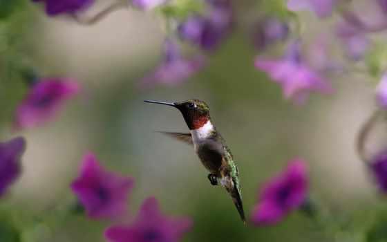 flor, beija, parede, flores, colibrí, pinterest, papéis, papel, baixar, aves,