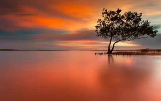 peaceful, закат, одинокий, дерево, scene, озеро, природа,