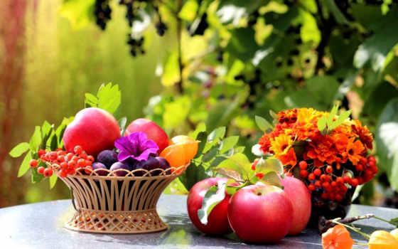 фрукты, яблоки, цветы, рябина, корзина, сливы, натюрморт, листва, еда,