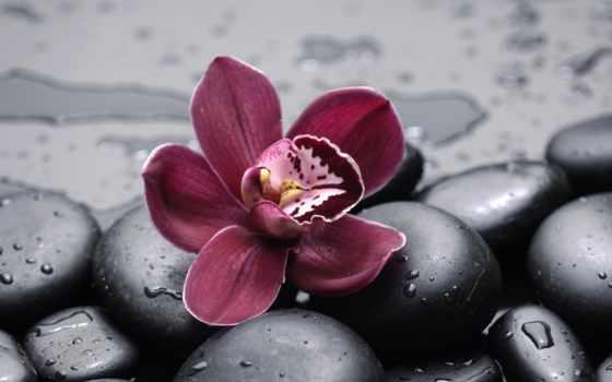 орхидея, орхидеи, фотообои, фотопанно, модульные, бордовая, sale, manufacture, фотообоев, доставка, беларуси,