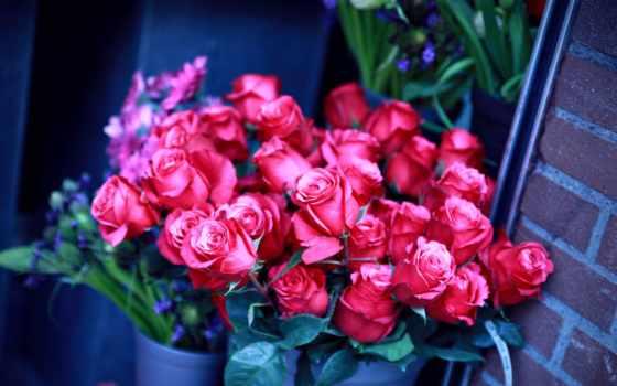 букет, розы, роз, cvety, большой, букеты,