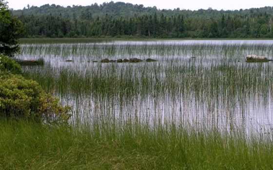 clouds, landscape, природа, marsh, water, отражение, листья,