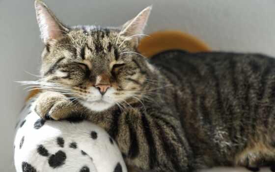 кот, деревня, день, feline, turkey, отображаться, advice, фея, владелец