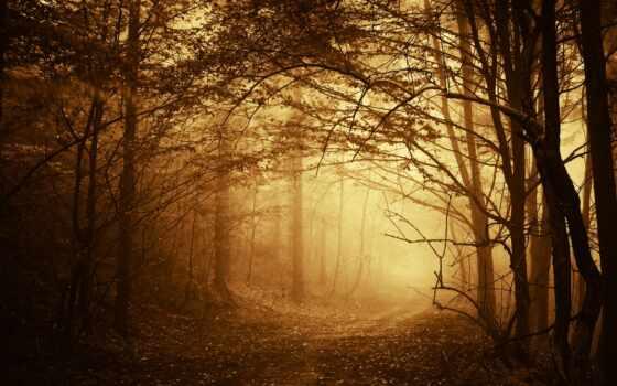 дорога, деревья Фон № 32071 разрешение 1920x1080