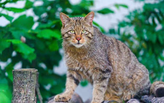 are, animals, por, cats, that, нас, verdad,