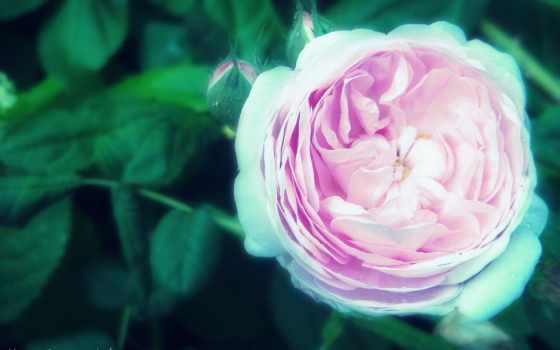 цветы, мне