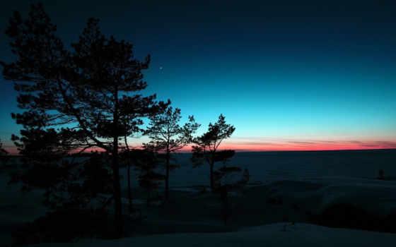 zima, priroda, деревя