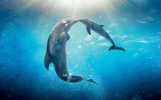 дельфин, дельфины, dolphins, качества, coralreef, под, свет, триал, водой,
