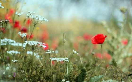 devushki, flowers, summer, курица, растения, красивые, life,
