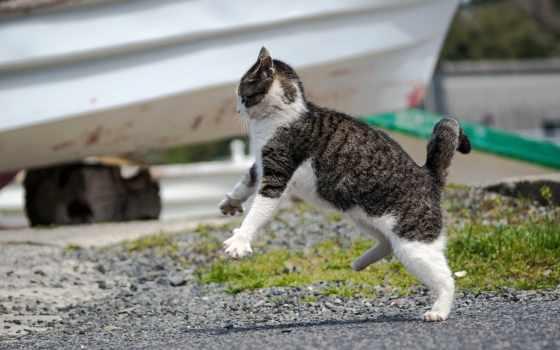 кот, zhivotnye, haustiere,
