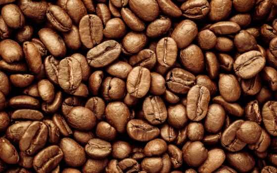 coffee, seed, текстура, indian, availability, grna, зерно