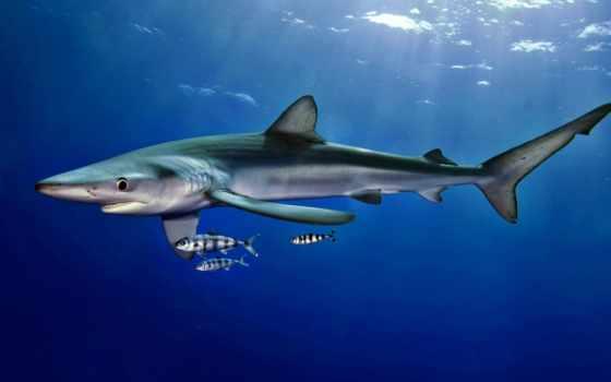 акула и рыбки