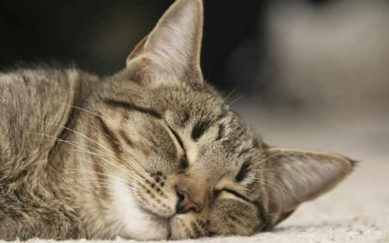 кот, спит, спать