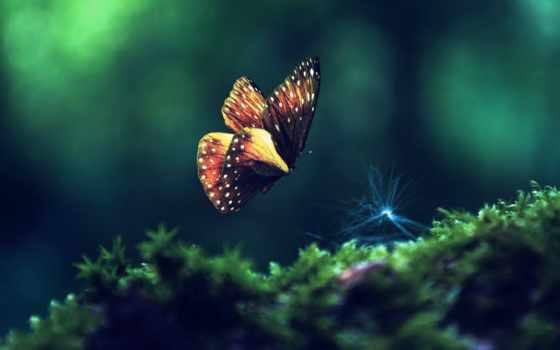 природа, бабочка, макро, красивые, капли, that, зелёная, трава, полет, страница, cvety,