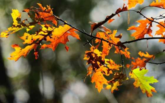 лес, divar, осень, pinterest, макро, mobile, листва, indir, branch,