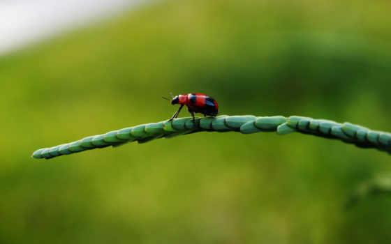 ladybug, miraculous, https,