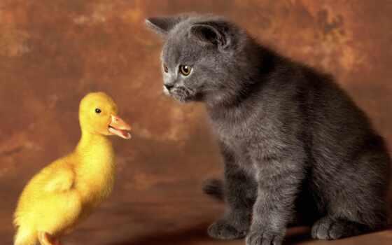 котенок, утенок, rub, кот, заказать, fast, друзья, cute, плакат