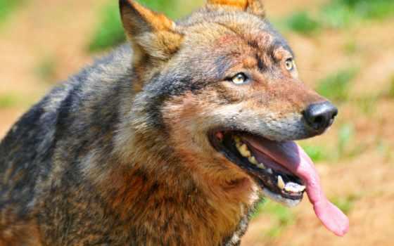 wolf, kurt, portrait