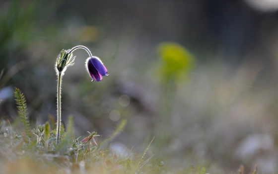маленький цветок