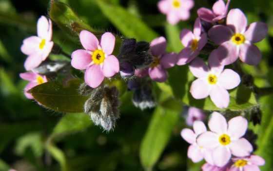 цветы, качественных, обоях