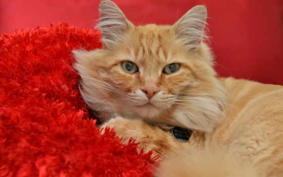 кот, red, оранжевый, cats, tabby, white, names, desktop, мужской,
