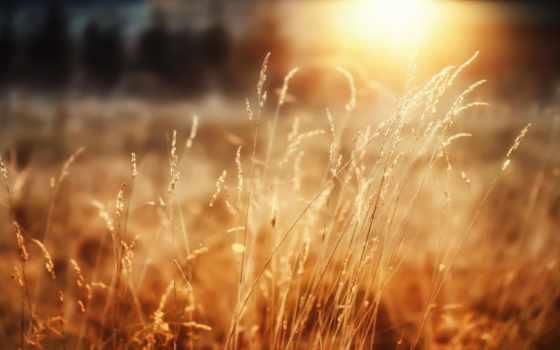 пшеница, sun, макро, лес, утро, трава, радость, графика, природа, качестве,