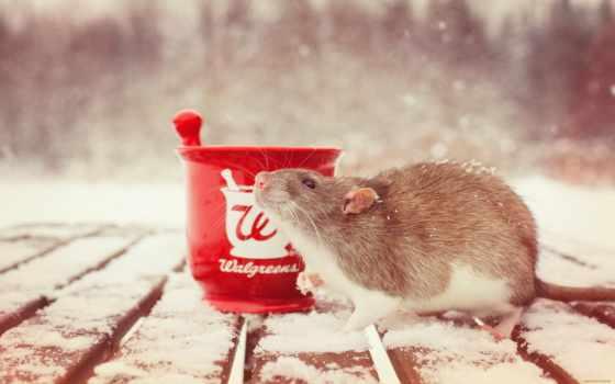 крыса, грызун, winter, снег, фотографий, хомяк, мортира, toy, cup,