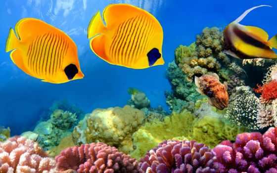 underwater, world, мира, заставки, подводного, красивые, качественные,