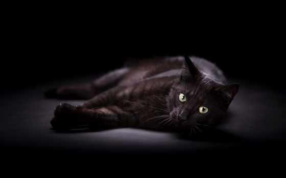 photos, zmysłowska, alicja, глаза, черный, кот, tapety,