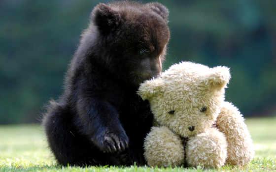 white, трава, высоком, медведь, плюшевый, toy, мишка, медвежонок,