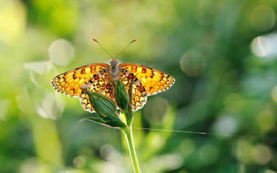 бабочка, zhivotnye, природа, размытость,