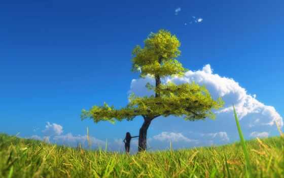 trees, коллекция, одинокий, небо, природа, loaded, фото, уж, трава, best