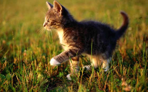 котенок, трава