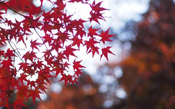 осень, листья, смотреть