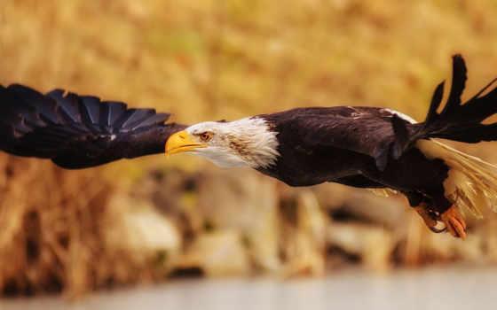 птицы, птица, крылья