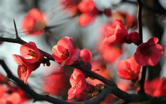 цветы, яблони, дерево