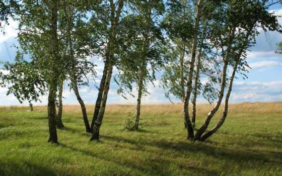 landscape, trees, лес, summer, природа, луг, июль, береза, поле, трава, кокшетау,