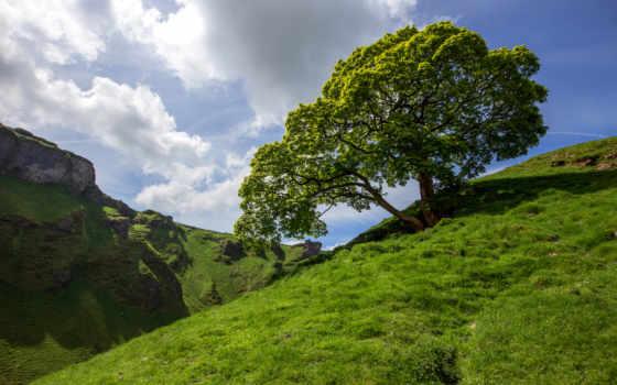 склон, трава, природа, дерево, trees, rock, mountains, desktop,