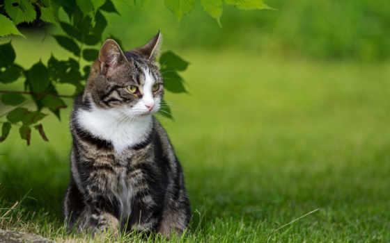природа, трава, кот, зелёный, природе, badger,