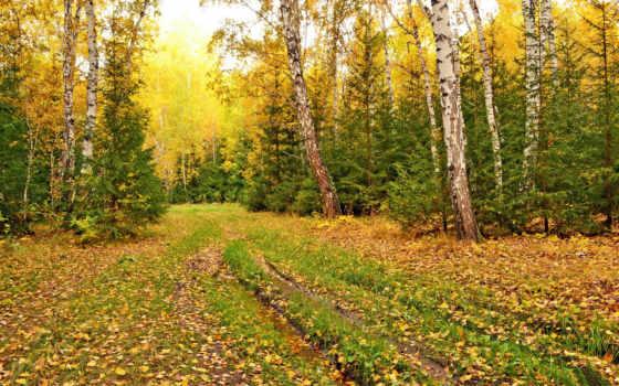 природа, картинка, осень