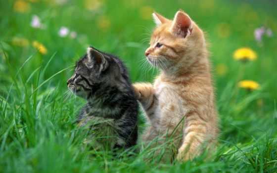 красивые, животных