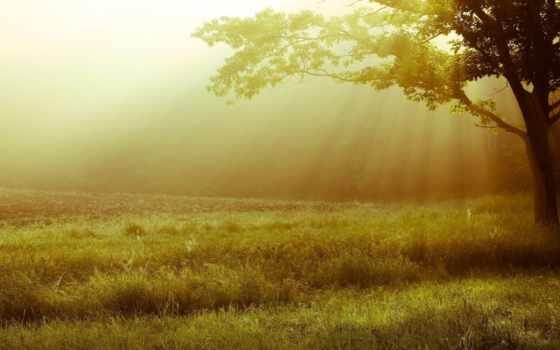 листья, дерево, трава